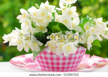 bunch of jasmine flowers on table in the garden