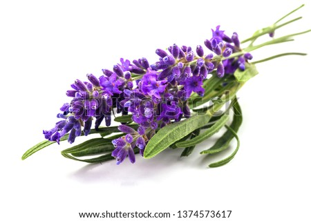 Bunch of lavander isolated on white Foto stock ©