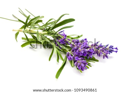Bunch of lavander isolated on white background. Foto stock ©