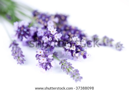 bunch of lavender flower isolated on white