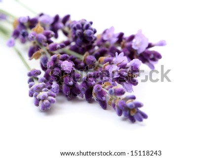 Organic Lavender Flowers Bunch of Lavender Flower