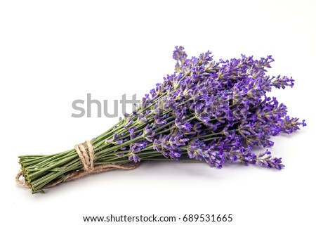 Bunch of lavender isolated on white background. Foto stock ©