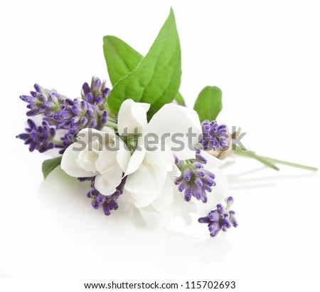 Bunch of lavender nd jasmine flowers on a white background