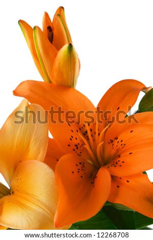 Bunch of Lily