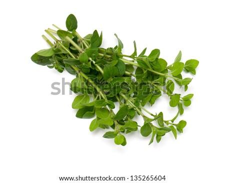 bunch of marjoram isolated on white background
