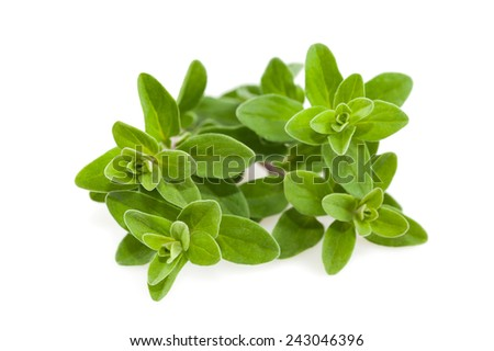 Bunch of marjoram isolated on white background Stock photo ©