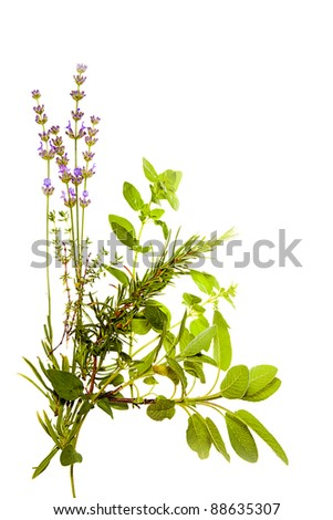 Bunch of Mediterranean herbs on pure white background: lavender, sage, oregano, thyme. Spring and summer concept; cooking concept. Copy space.