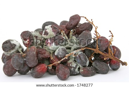 Bunch of moldy red grapes isolated on white, copy space, macro, close up