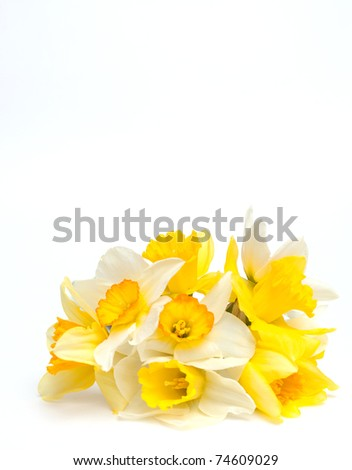 bunch of narcissus and empty space for your text