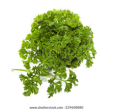bunch of parsley on white background #229608880