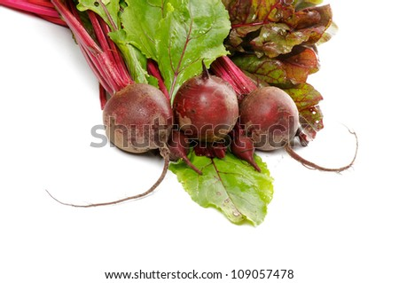 Bunch of Perfect Raw Young Beets and Beet Tops isolated on white background