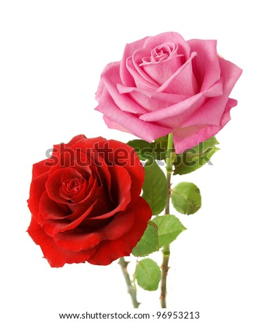 Bunch of pink and red roses