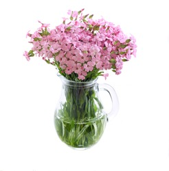 Bunch of pink field flowers in a jar over white background