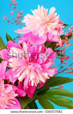 bunch of pink peony flowers against blue background
