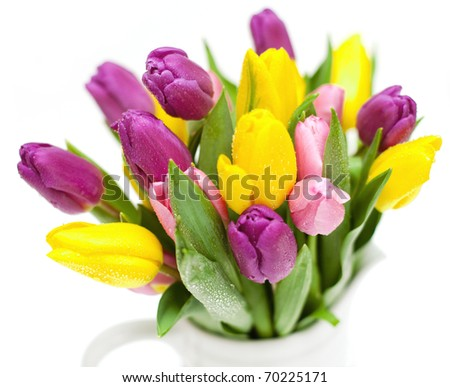 bunch of pink, purple and yellow tulips with water-drops