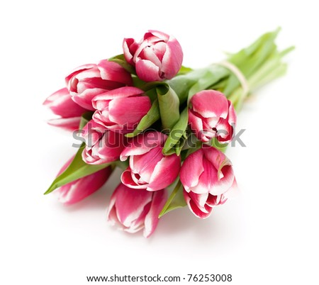 bunch of pink tied tulips on white background