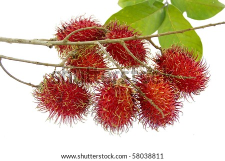 bunch of rambutans is asean fruit