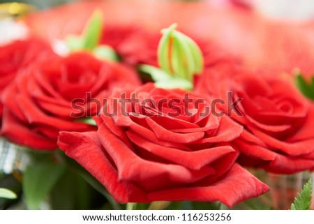 Bunch of red beautiful roses. Macro shot with green leaves