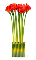 Bunch of Red calla lily in glass vase isolated on white
