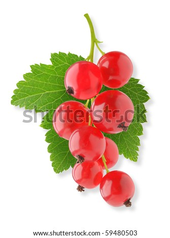 Bunch of red currants isolated on white