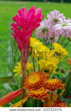 Bunch of red ginger and white, brown, yellow chrysanthemums flowers in vase with green and blur background . Fresh chrysanthemum and ginger flowers bouquet.  #1237225576