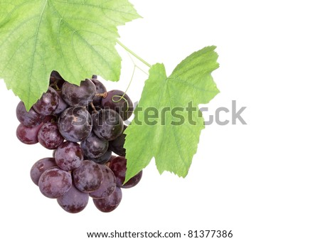 bunch of red grapes in a grapevine isolated