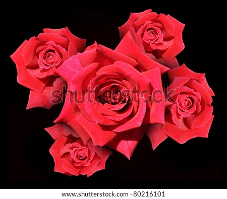 bunch of red roses on black background