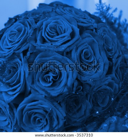 Bunch of red roses (toned in blue)