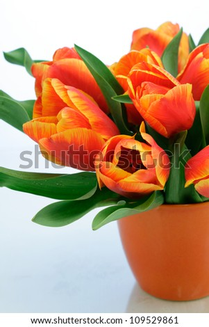 Bunch of red tulips in a vase isolated on white background