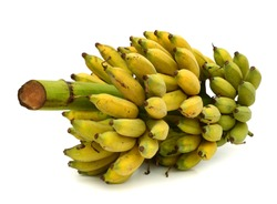 Bunch of ripe and ripening bananas isolated on white background.