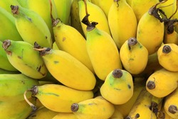 Bunch of ripe banana