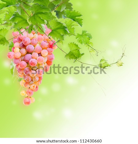 Bunch of ripe pink grapes on branches with green leaves.