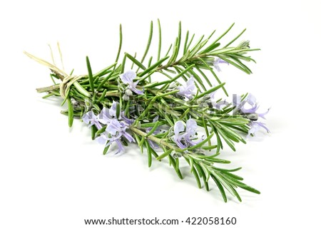 bunch of rosemary isolated on white background #422058160