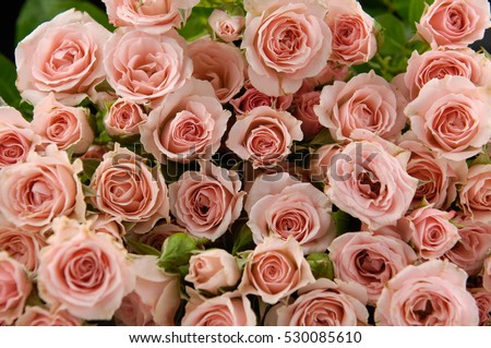 Bunch of roses isolated background #530085610