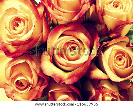Bunch of roses retro style