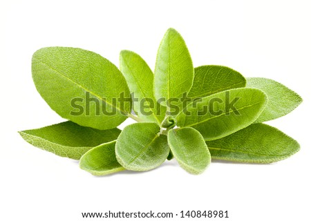 Bunch of sage isolated on white