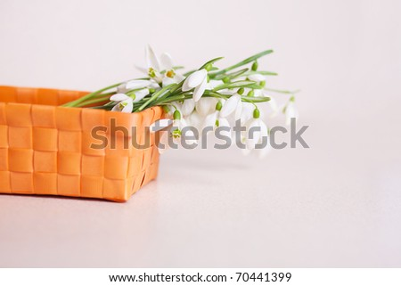 Bunch of snowdrop flowers in basket on white background