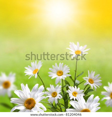 Bunch of spring flowers in the meadow