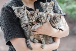 bunch of tabby kittens in female hands