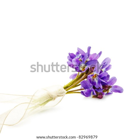bunch of Viola  isolated on white