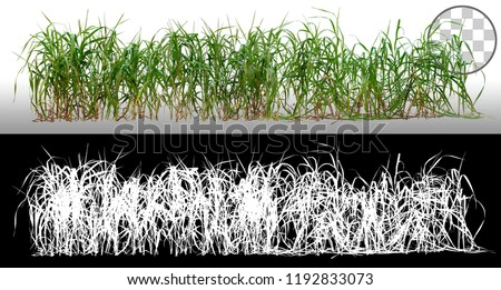 Bunch of wild green grass. Blades of grass. Green tufts isolated on transparent background via an alpha channel. High quality mask without unwanted edge. For professional composition. Tuft of grass.\n