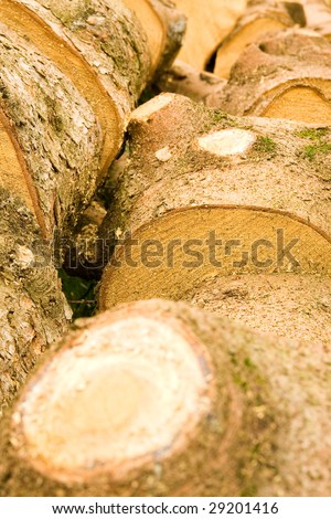 Bunch of wooden trunks cut to small pieces-stumps.