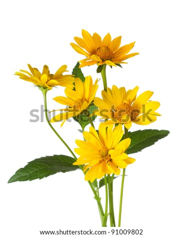 bunch of yellow daisy flowers on white background