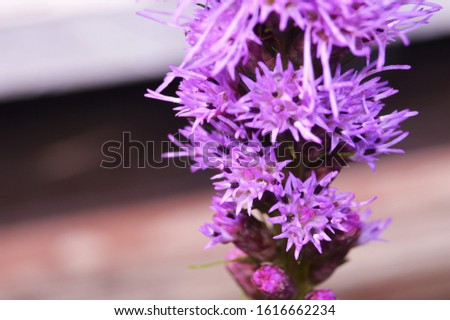 Bunches of Bunches of Spiky Purple Petals