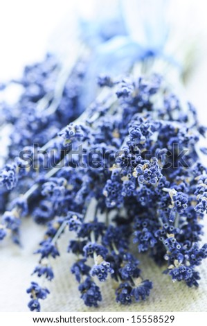 Bunches of dried lavender herb close up