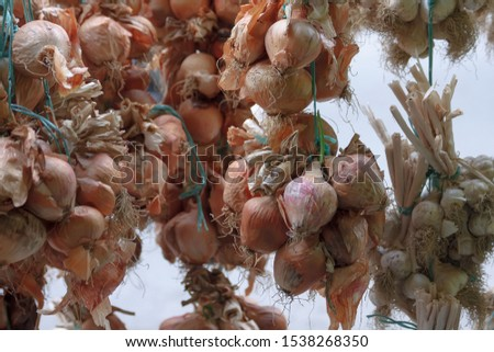 bunches of dried onion heads tied with blue thread hang next to bunches of garlic