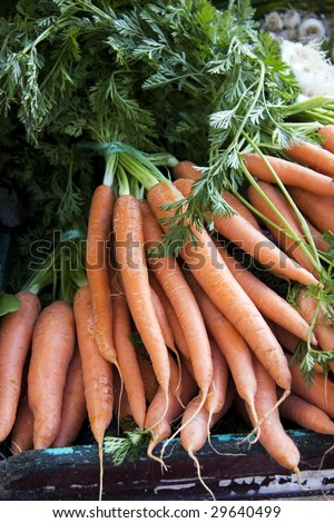 Bunches of fresh carrots for sale at a market