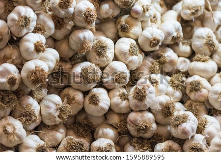 Bunches of garlic. Bunches of garlic suitable for background. Powerful and natural antibiotics