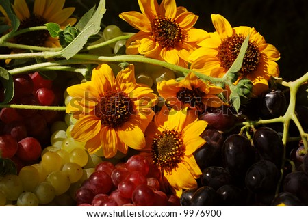 Bunches of grapes and sunflowers in a vintage wooden fruit box picked fresh from the garden (part of a series)