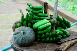 Bunches of green bananas and a green pumpkin on the wooden table prepared with a machete knife for the elephants feeding in Dalat, Vietnam.